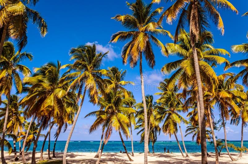 Den höga kokosnöten gömma i handflatan, vit sand, det blåa havet och folk på shoen arkivbilder