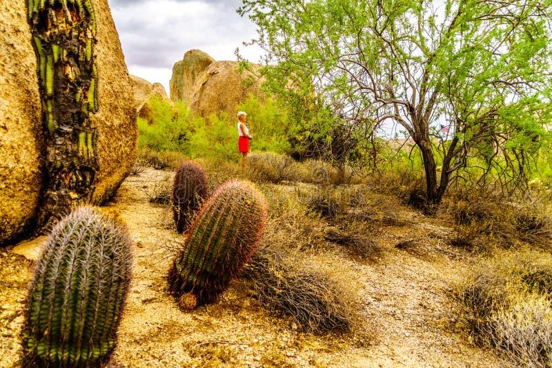 Den höga kvinnan under kakturs och stora stenblock i Arizona deserterar fotografering för bildbyråer