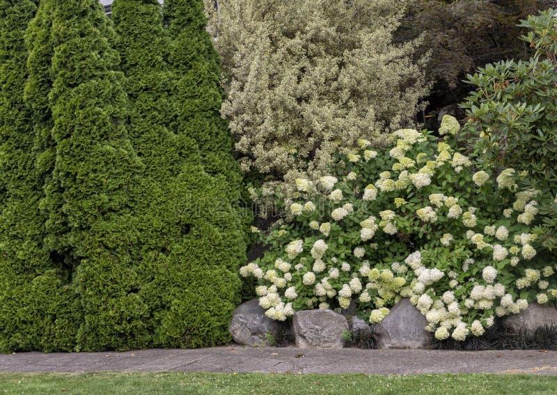 Den högväxta häcken som komponeras av multipel, planterar skyddar fullständigt ett hus i en Seattle neighborhod arkivfoto