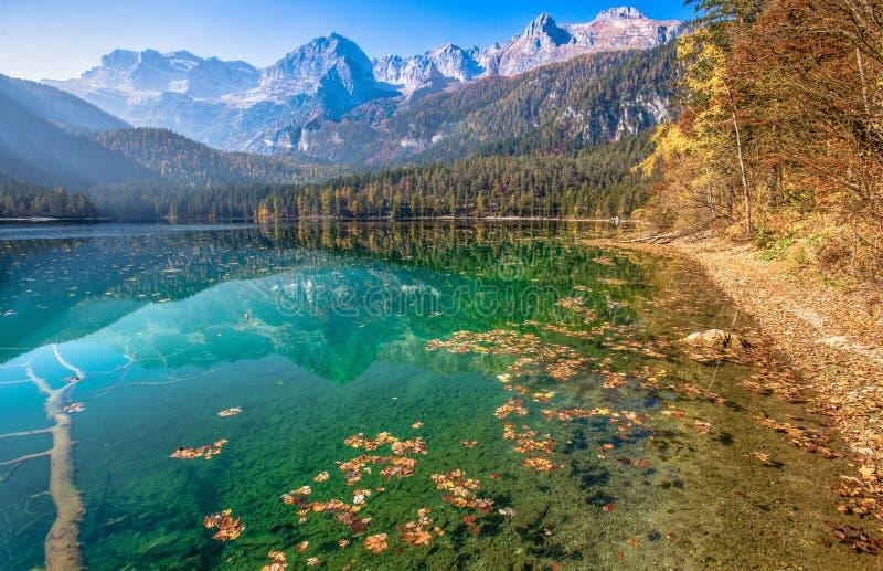 Den höstliga sikten av Tovel sjön, Val di Non inom den naturliga Adamelloen-Brenta parkerar, Trentino Alt-Adige, Italien royaltyfria foton