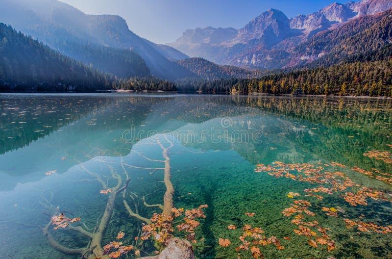 Den höstliga sikten av Tovel sjön, Val di Non inom den naturliga Adamelloen-Brenta parkerar, Trentino Alt-Adige, Italien royaltyfri fotografi