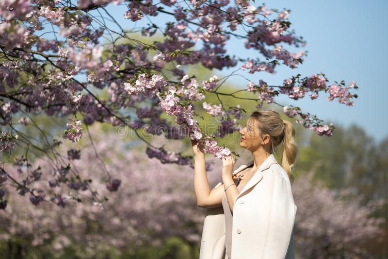 Den h?rliga blonda unga kvinnan i Sakura Cherry Blossom parkerar i v?r som tycker om naturen och fri tid under hennes resande arkivbild