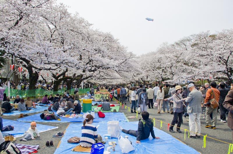 Den Hanami festivalen i Ueno parkerar fotografering för bildbyråer