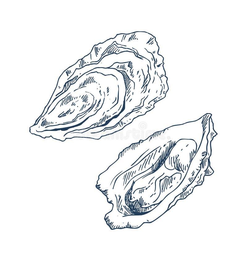 Den havs- läckerhettvåskaligt skaldjurostron skissar affischen royaltyfri illustrationer