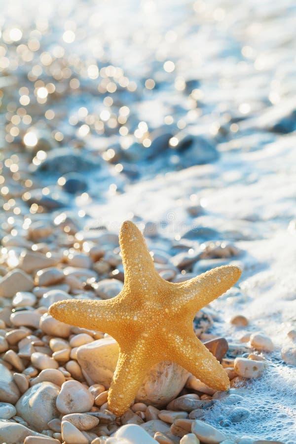 Den havsstjärnan eller sjöstjärnan på kiselstenar sätter på land i sommardag royaltyfri fotografi