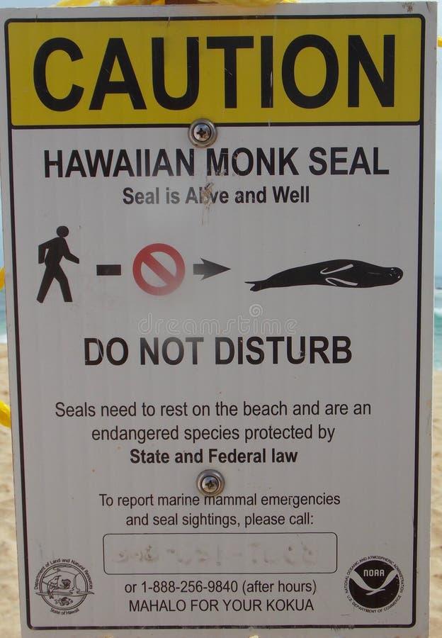 Den hawaianska munken Seal - stör inte arkivbilder