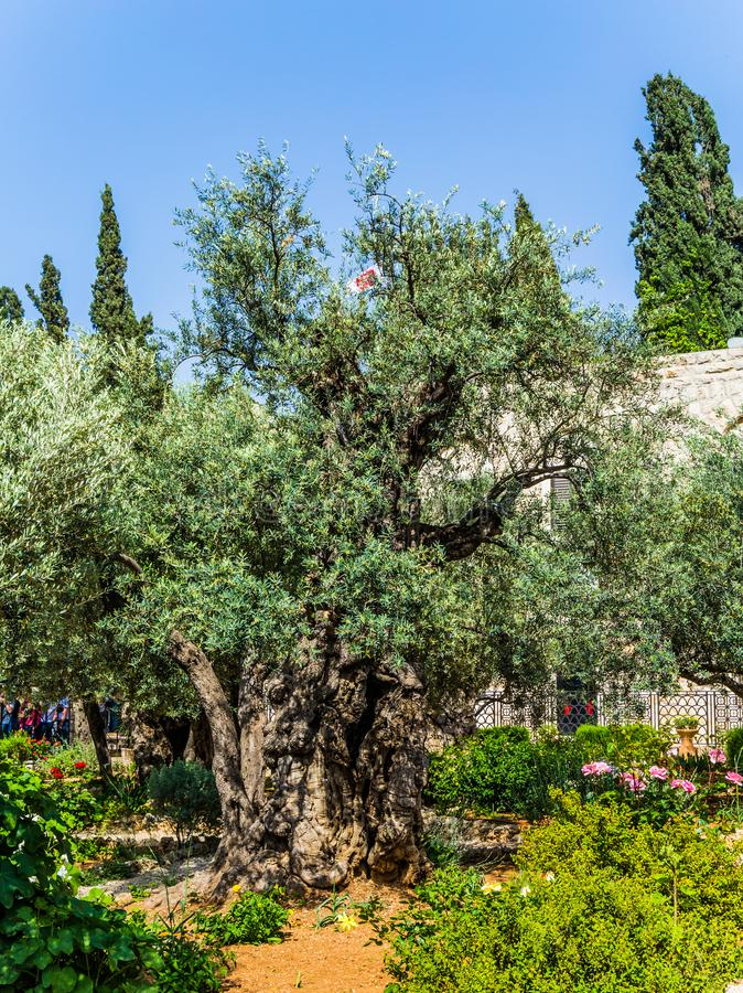 Den heliga tr?dg?rden av Gethsemane royaltyfri bild