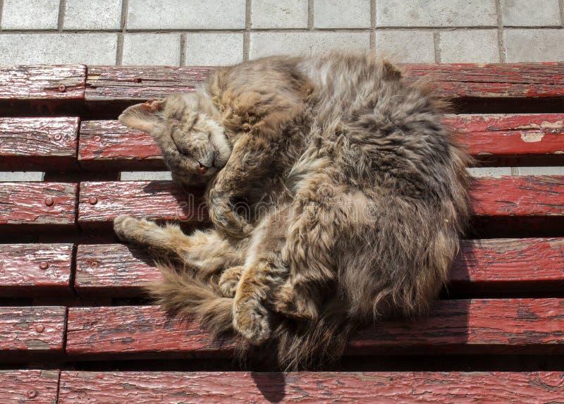 Den hemlösa katten sover på en hållplats royaltyfri bild