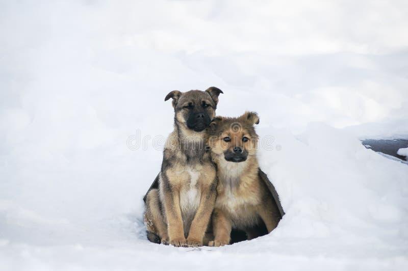 Den hemlösa unga hunden klamra sig fast intill sig för att hålla varmt Problemst arkivfoto