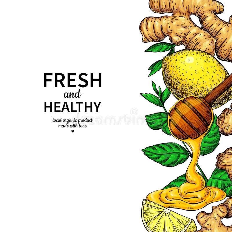 Den honung-, ingefära-, citron- och mintkaramellvektorn gränsar teckningen vektor illustrationer