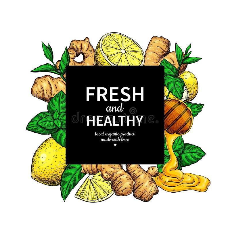 Den honung-, ingefära-, citron- och mintkaramellvektorn inramar teckningen Träsked, honungdroppe, royaltyfri illustrationer