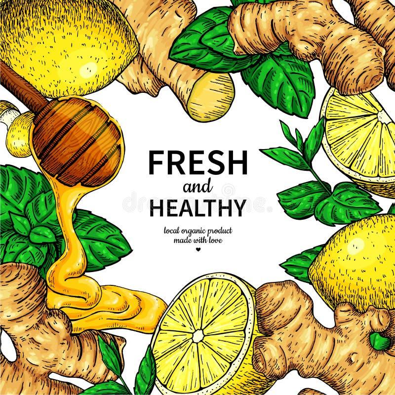 Den honung-, ingefära-, citron- och mintkaramellvektorn inramar teckningen Träsked, honungdroppe, vektor illustrationer