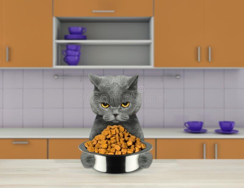 Den hungriga katten med matskålsammanträde i kök och ordnar till för att äta royaltyfri illustrationer