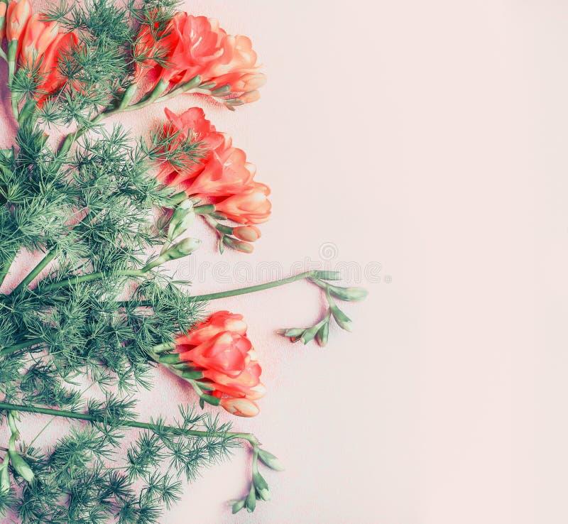 Den idérika blom- gränsen med freesia blommar på bakgrund för pastellfärgade rosa färger, bästa sikt royaltyfri bild