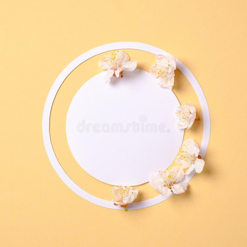Den idérika lägenheten lägger sammansättning: tomt papper för cirkel och blomma sakura kronblad på gul bakgrund r royaltyfria foton