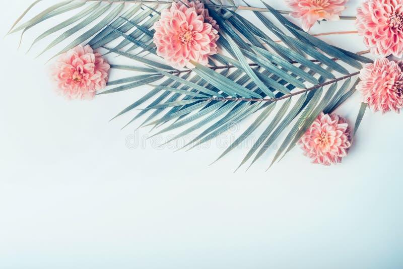 Den idérika orienteringen med tropiska palmblad och pastellfärgade rosa färger blommar på ljus skrivbords- bakgrund för turkosblå fotografering för bildbyråer
