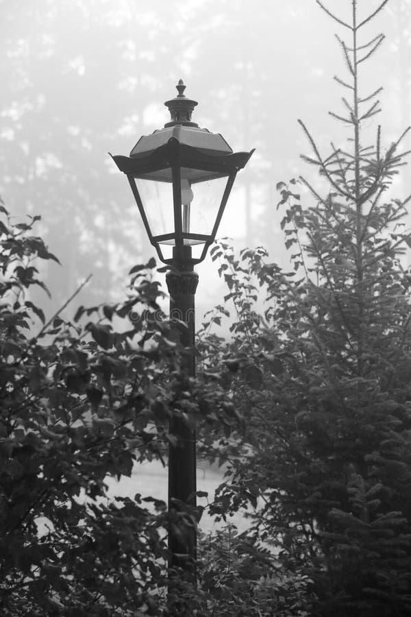 Den idérika visionen av morgonmisten, dimmig morgon för höst royaltyfria bilder