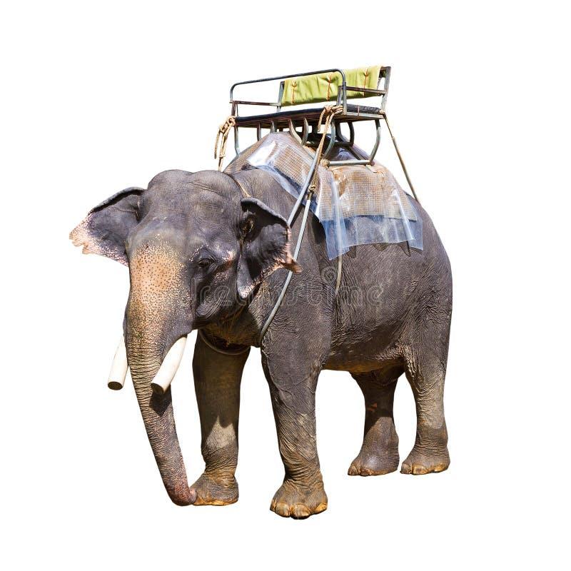 Den indiska elefanten med tar av planet arkivfoto