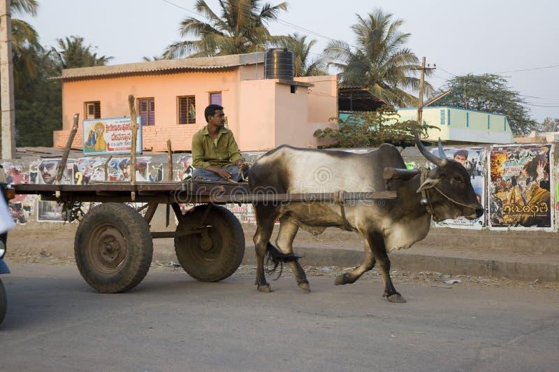 Den indiska mannen rider en vagn som dras av en oxe Indien Goa - 03 februari 2009 arkivfoton