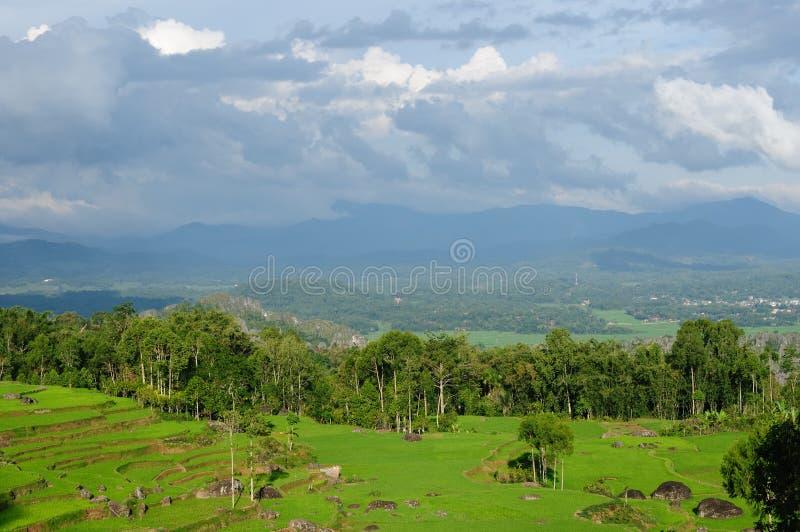 den indonesia ricesulawesi tanaen terrasserar toraja arkivfoto