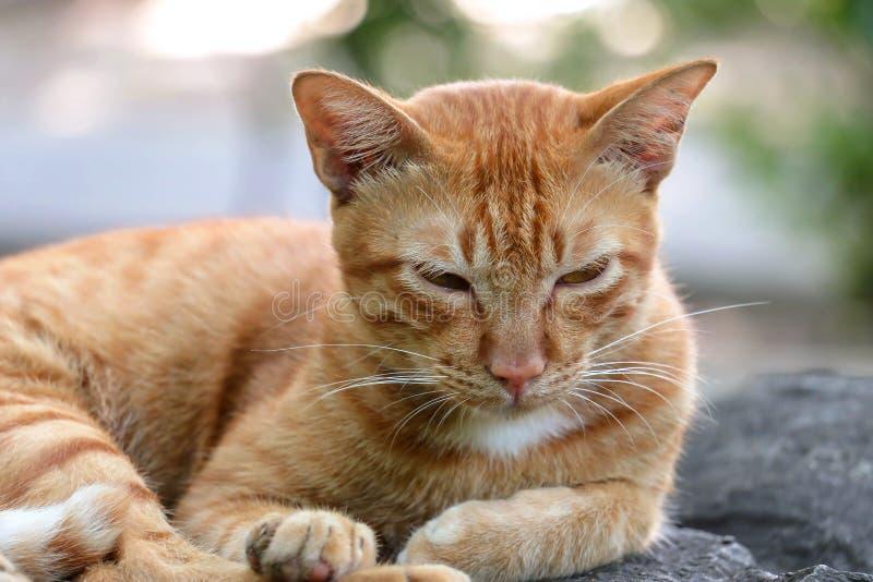 Den inhemska orange katten är utomhus sömnig arkivbild