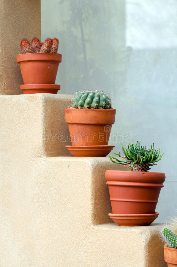 Färgrik kaktus i krukar royaltyfria bilder