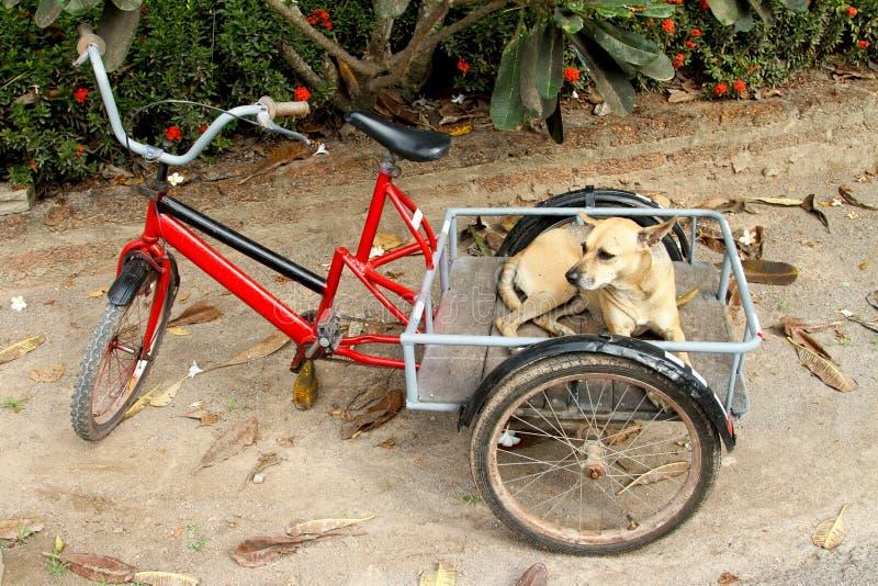 Den intelligenta hunden arkivbilder