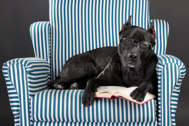 Den intelligenta hunden i exponeringsglas läser en bok royaltyfri foto