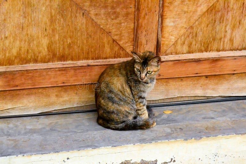 den intresserade katten isolerade looken skjuten sittande studiowhite royaltyfri foto