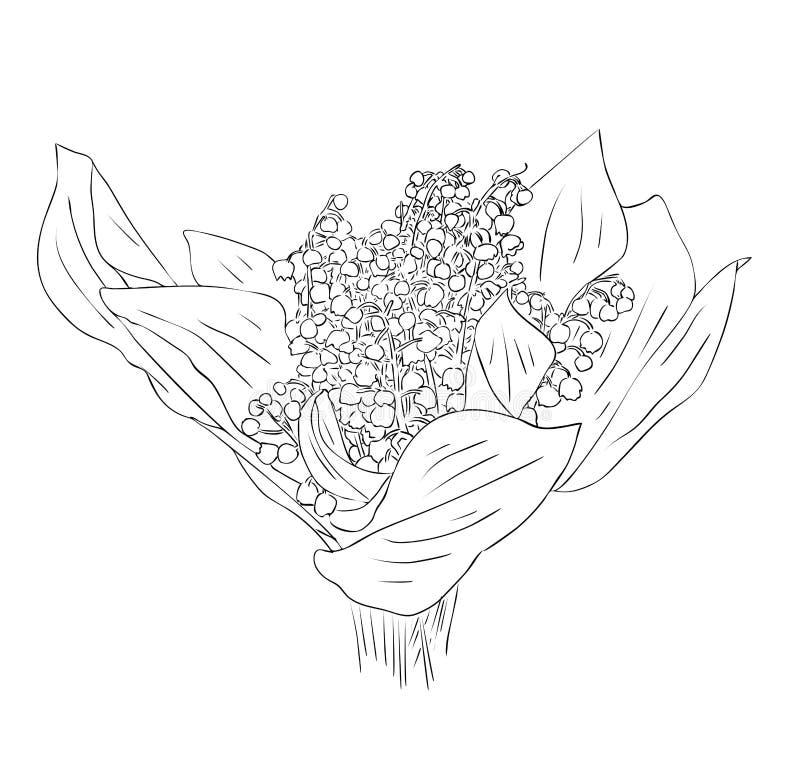 Den isolerade buketten av liljekonvaljblommor i svartvita färger, översiktshand målade teckningen stock illustrationer