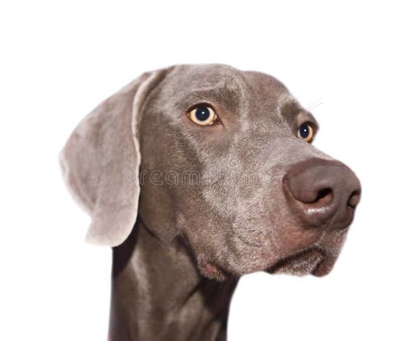den isolerade hunden tystar ned s fotografering för bildbyråer