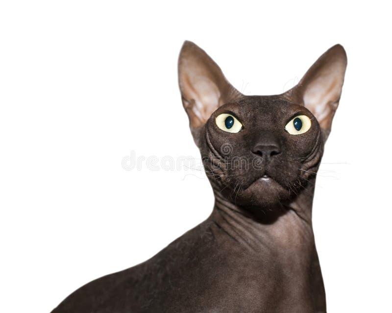 den isolerade katten tystar ned s arkivfoton