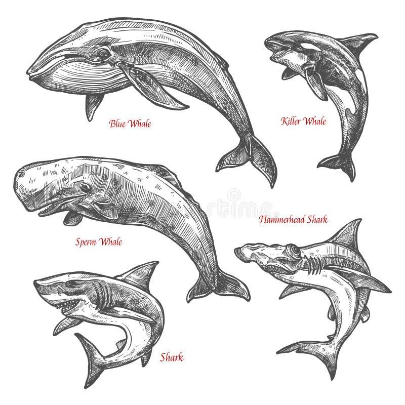 Den jätte- vektorn för val för hajen för havsdjur skissar symboler royaltyfri illustrationer