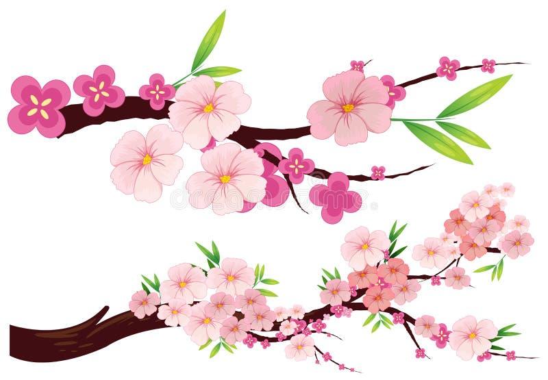 Den körsbärsröda blomningen blommar på filialer royaltyfri illustrationer
