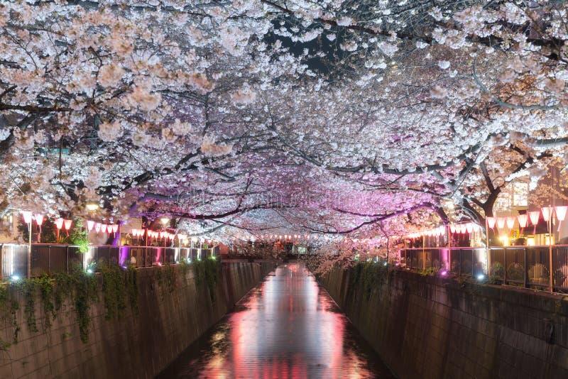 Den körsbärsröda blomningen fodrade den Meguro kanalen på natten i Tokyo, Japan Spri arkivfoto