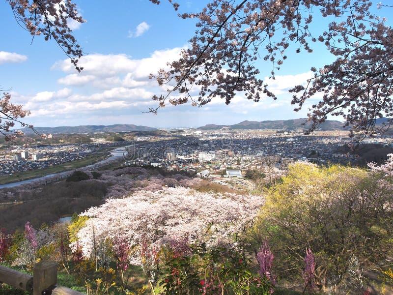 Den körsbärsröda blomningen i Funaoka Joshi parkerar i den Miyagi prefekturen, Japan arkivfoto
