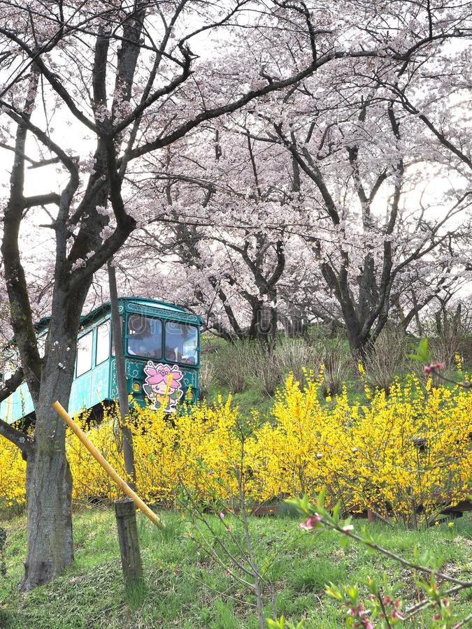Den körsbärsröda blomningen i Funaoka Joshi parkerar i den Miyagi prefekturen, Japan royaltyfri bild