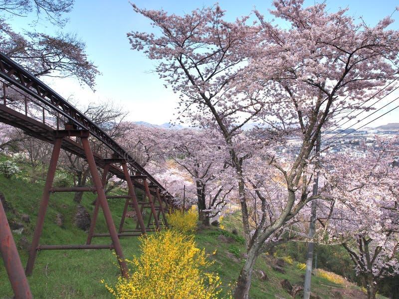 Den körsbärsröda blomningen i Funaoka Joshi parkerar i den Miyagi prefekturen, Japan arkivfoton