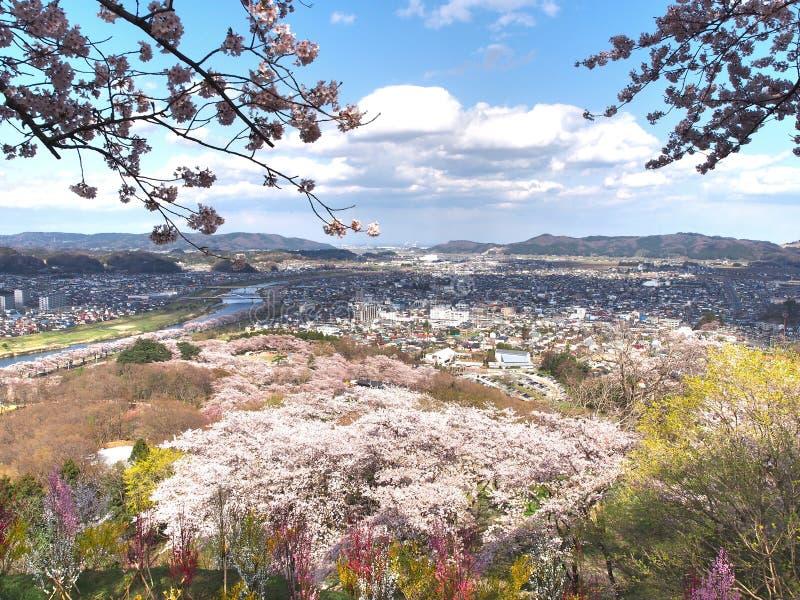 Den körsbärsröda blomningen i Funaoka Joshi parkerar i den Miyagi prefekturen, Japan arkivbilder