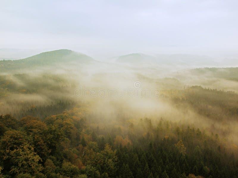 Den kalla dimmiga natten i en nedgångdal av Sachsen Schweiz parkerar Kullar ökande från dimmigt mörker royaltyfri bild