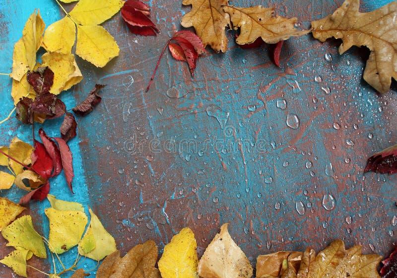 Den kalla hösten och regn, blått målar lite royaltyfri bild