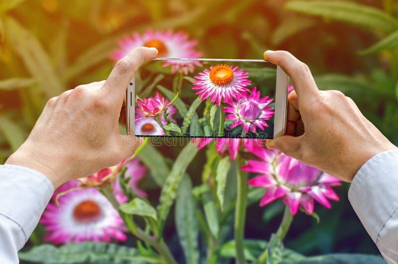 Den kantjusterade skottsikten av man` s räcker danandefotoet på mobiltelefonen fotografering för bildbyråer
