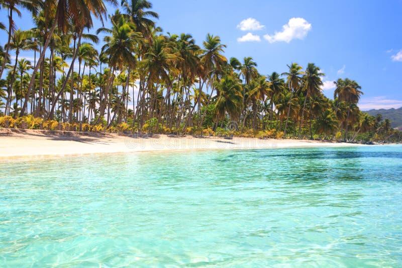 den karibiska stranden gömma i handflatan sandtreewhite royaltyfria bilder