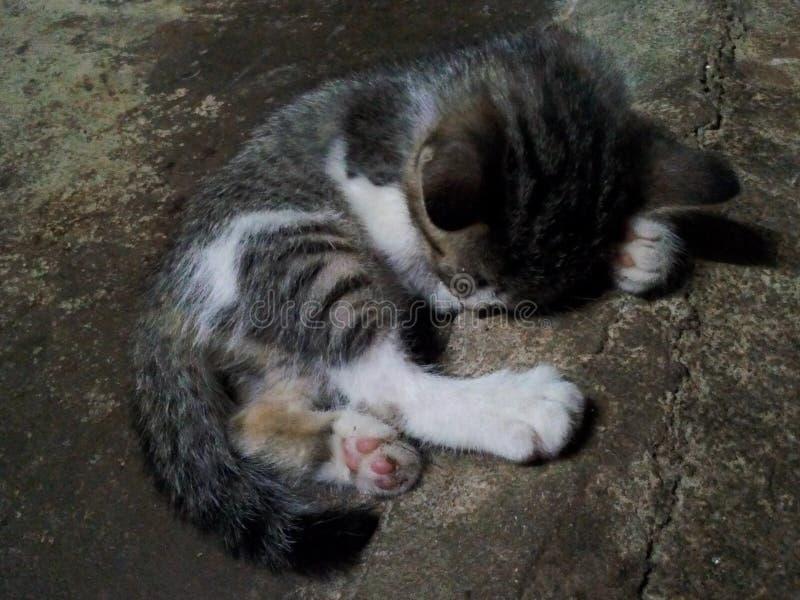 Den katt arkivbild