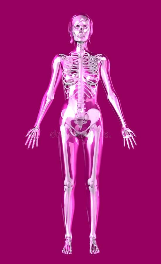 den klara clippingen inkluderar den rose skelett- kvinnan för banan royaltyfri illustrationer