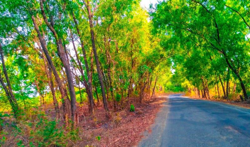 Den Konkan byvägen går till vaibhavwadimarknaden arkivfoto