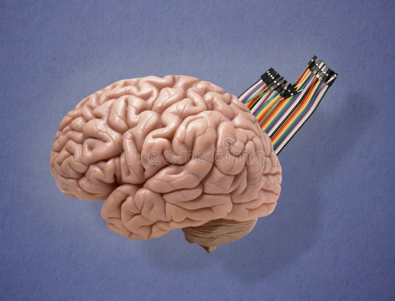 den konstgjorda hj?rnan circuits mainboard f?r elektronisk intelligens f?r begrepp ?ver royaltyfria foton