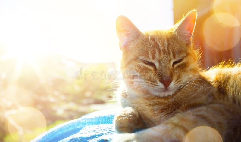 Den kopplade av och lyckliga katten får nöje som på våren värma sig solen arkivbild