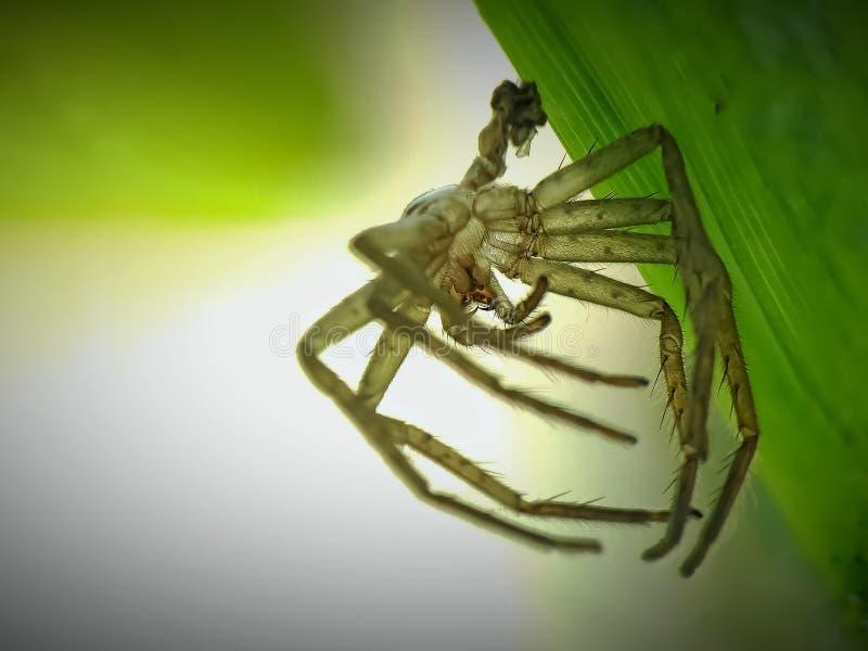 den kvarlämnade spindelhuden royaltyfria foton