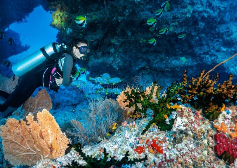 Den kvinnliga dykaren undersöker en korallrev i Indiska oceanen, Maldiverna arkivbilder
